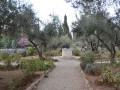 Getsemanská záhrada, kde sa Pán Ježiš modlil, potil krvou a kde sa odovzdal Božej vôli.
